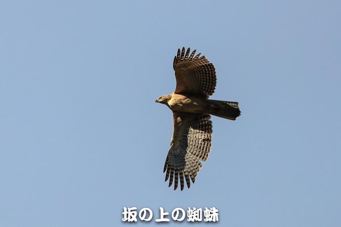 03-TACK0176.jpg