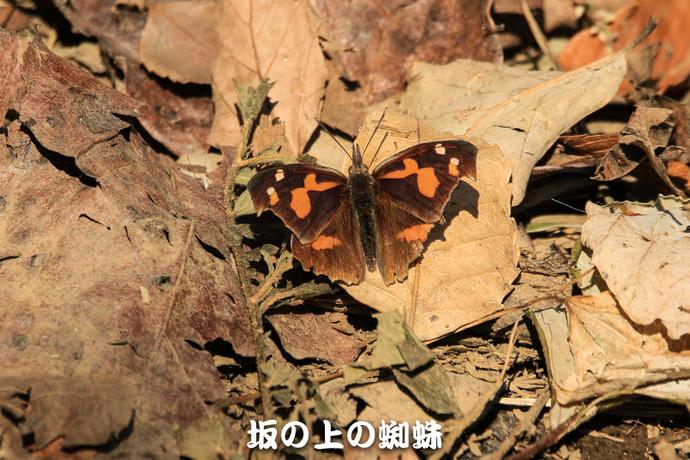 03-TACK1659-2LR-1.jpg