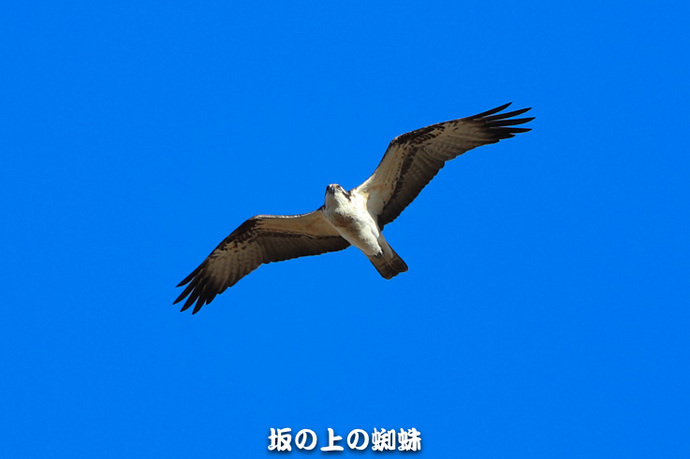 03-TACK7788LR-1.jpg