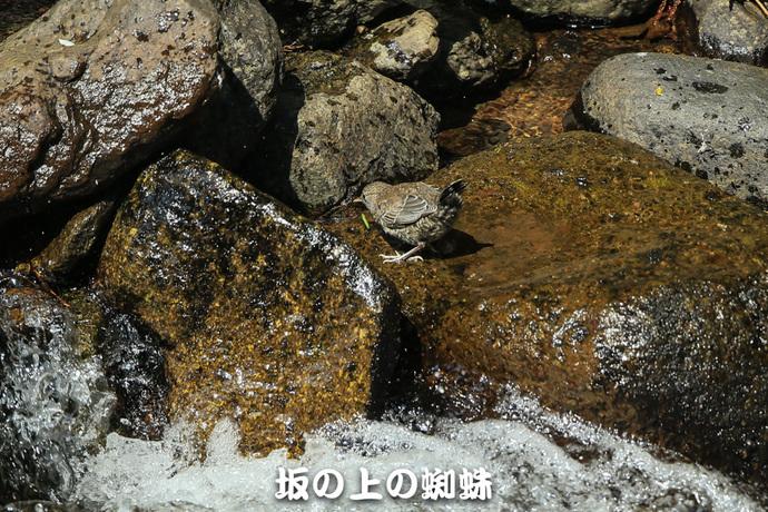 04-E1DX0110-2-LR.jpg