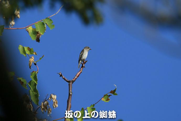 04-E1DX4673.jpg