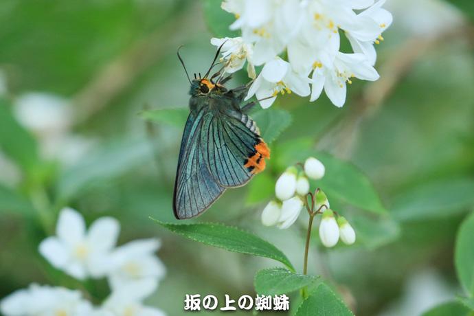 04-EO7D0283-2-EditLR-1-2.jpg