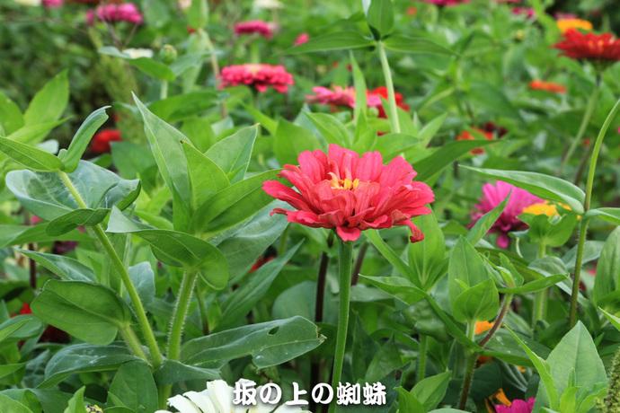 04-IMG_4703-LR.jpg