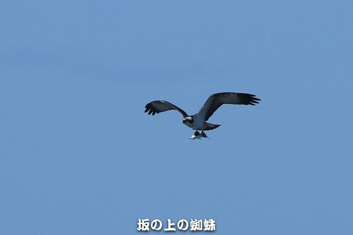 05-E1DX8702.jpg