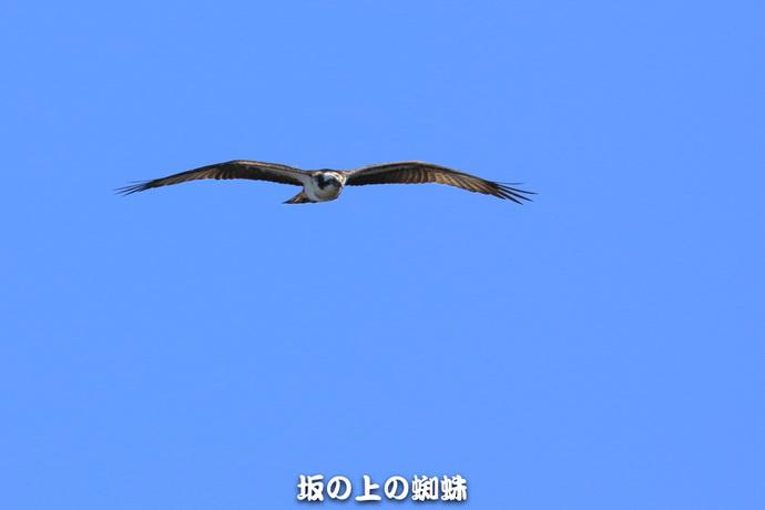 05-EO7D8226.jpg