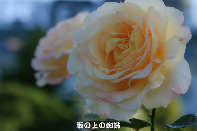 05-IMG_0909-2LR-1-2.jpg