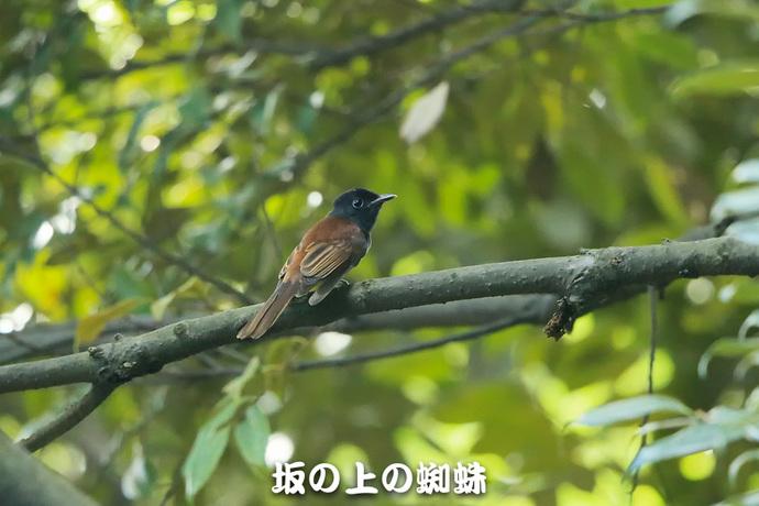06-E1DX4687.jpg