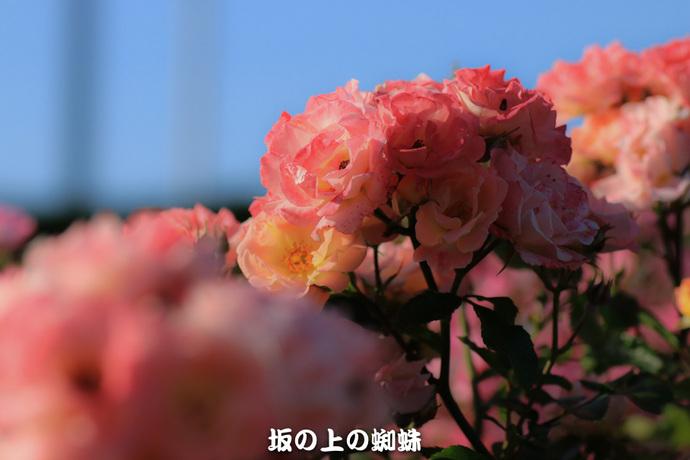 06-IMG_0912-2LR-1-2.jpg