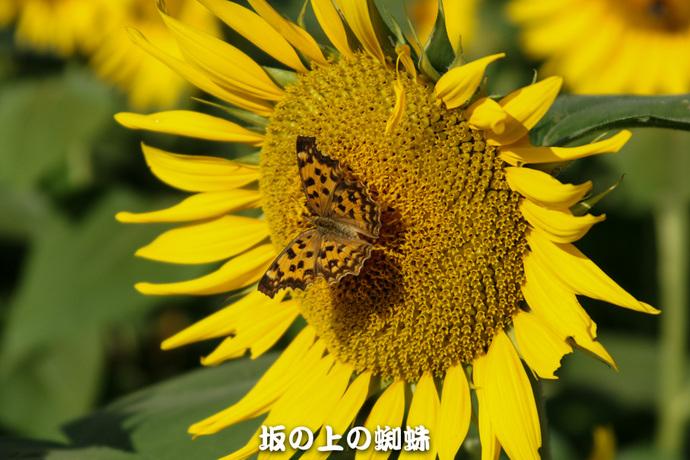 07-DSC03105-LR.jpg
