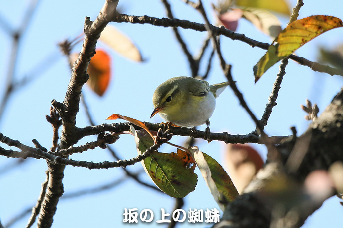 07-E1DX9126-2-Edit-LR1.jpg