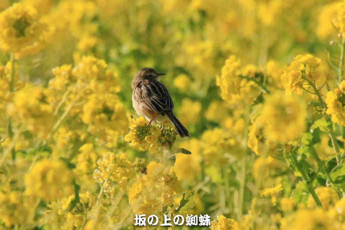07-EO7D2798-2LR-1.jpg