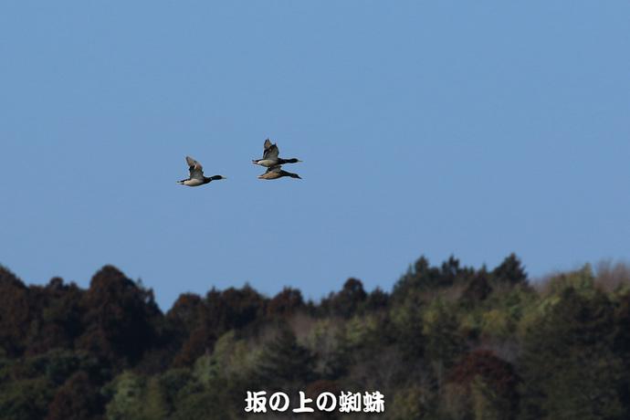 08-EO7D8450.jpg