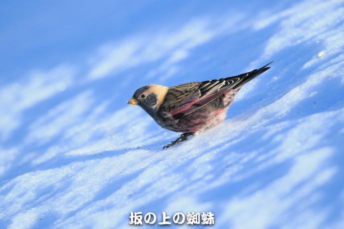 09-E1DX4613-LR.jpg
