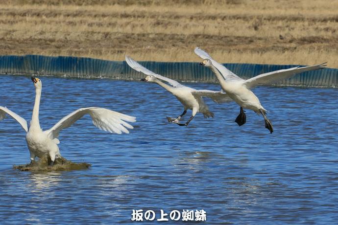 09-EO7D0734-2LR-1.jpg