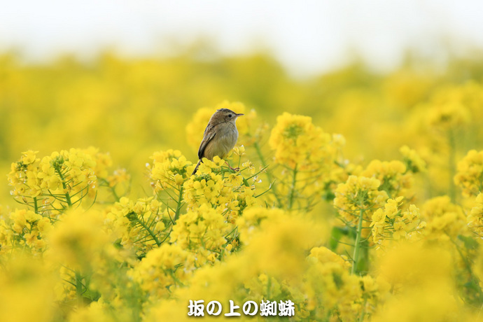 09-EO7D6713-2LR-1.jpg