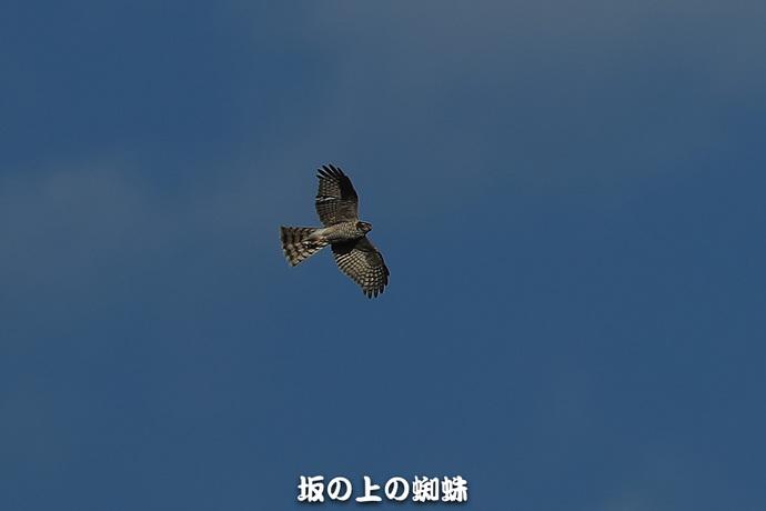 09-TACK3547.jpg