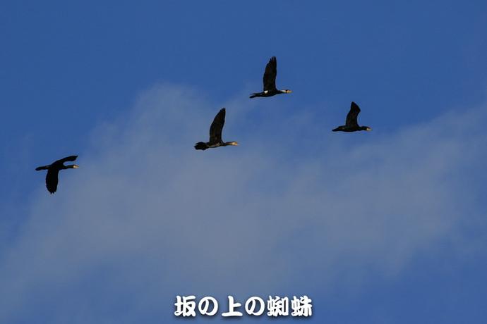 09-TACK4153-2LR-1.jpg