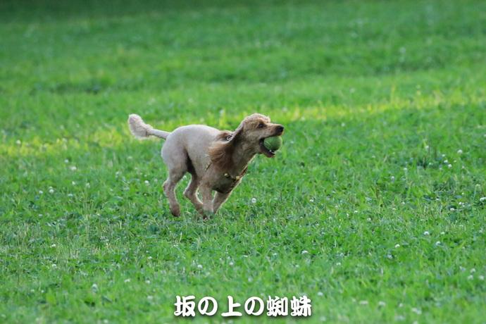09-TACK4664-2-LR.jpg