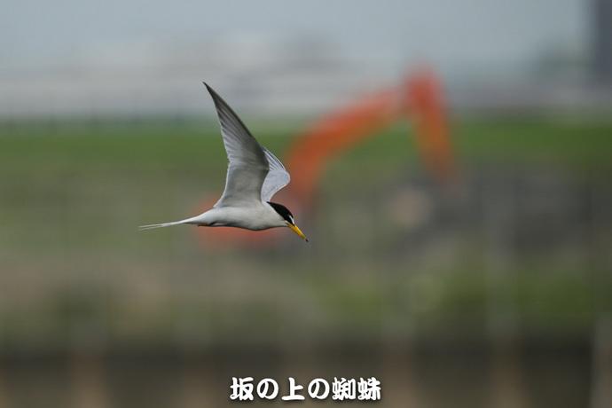 10-2E1DX0496-LR.jpg