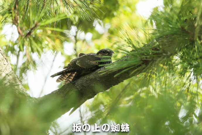 10-E1DX5109.jpg