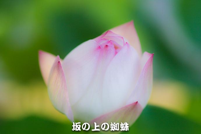 10-IMG_7978-2-LR.jpg