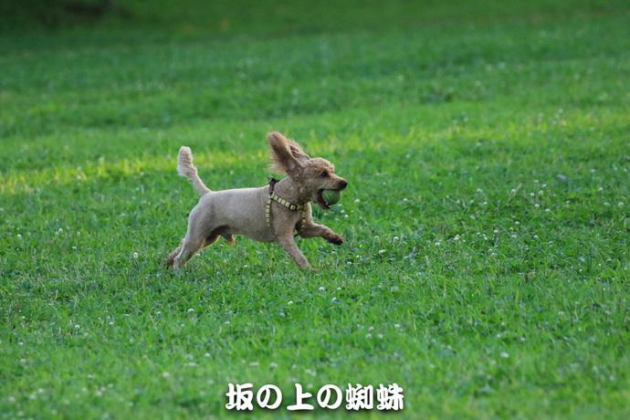 10-TACK4666-2-Edit-LR.jpg