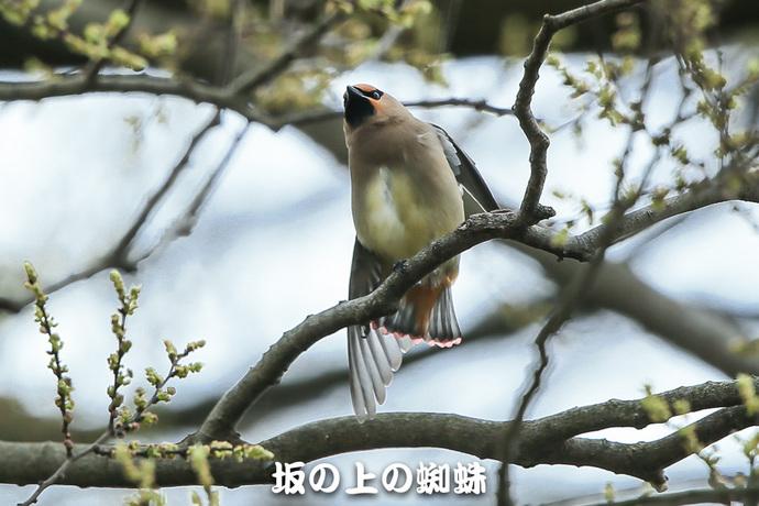 11-E1DX6946.jpg