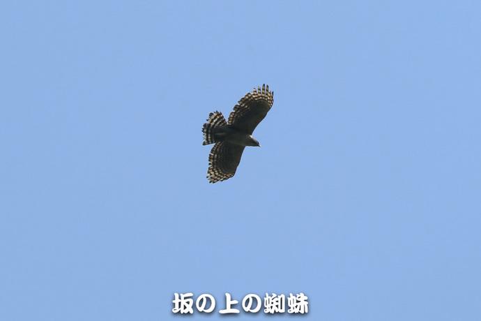 12-E1DX1102-2-2-LR.jpg