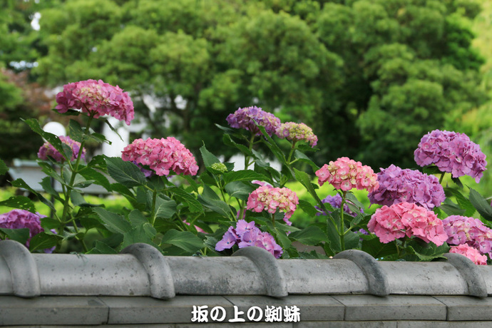 12-IMG_0827-2LR-1.jpg