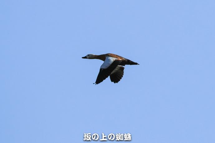 13-E1DX3362-2LR-1-2.jpg