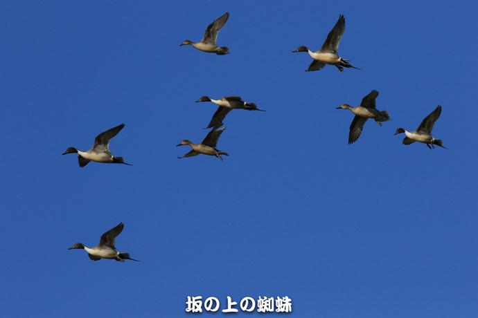 13-EO7D1400-2LR-1.jpg