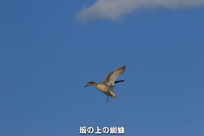 14-EO7D1489-2LR-1.jpg