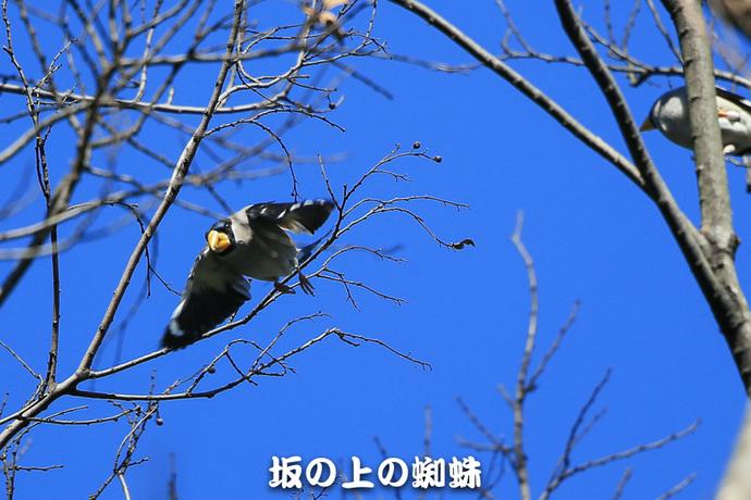 15-E1DX1564-LR.jpg