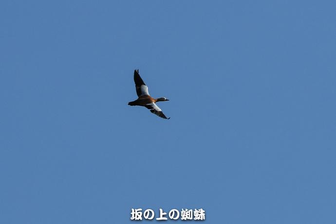 15-E1DX3375-2LR-1.jpg
