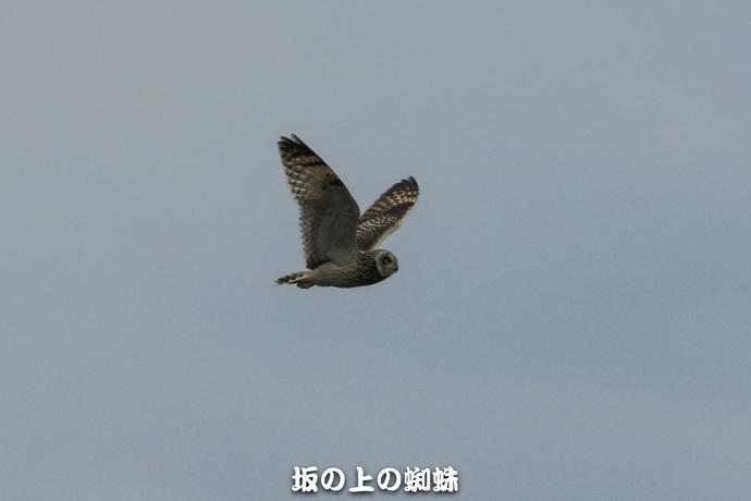 29-EO7D2318.jpg