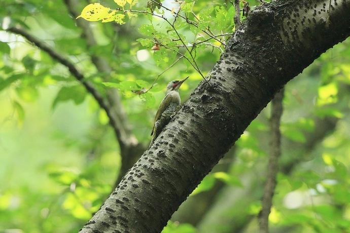 巣によって来るもしばらく様子を見ます。