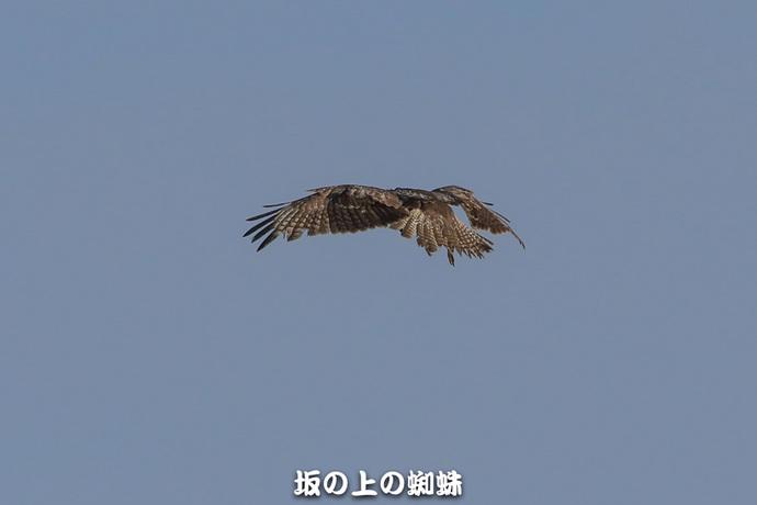 a12-EO7D3632-2LR-1.jpg